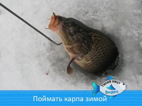 Поймать карпа зимой