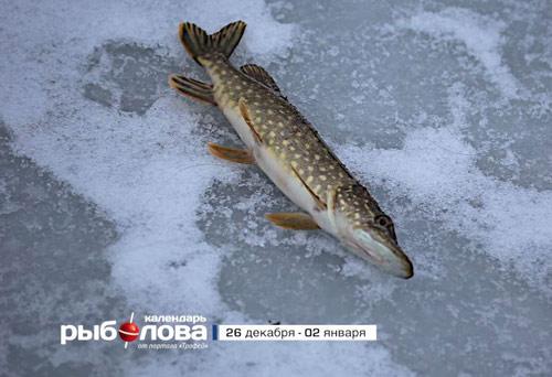 Календарь рыболова с 26 декабря по 02 января 2016 года