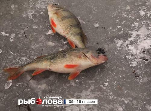 Календарь рыболова с 9 по 16 января 2017