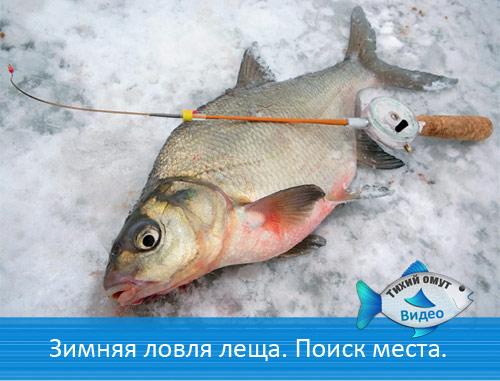 Зимняя ловля леща.