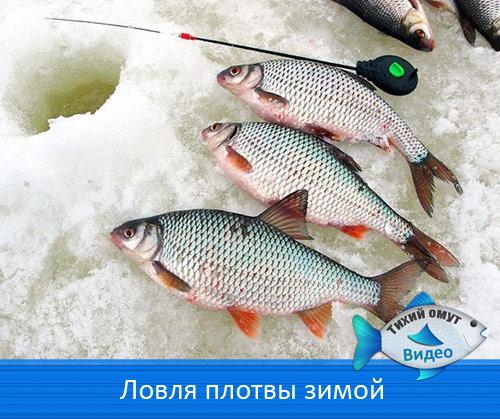 рыбалка плотвы в глухозимье на плотву