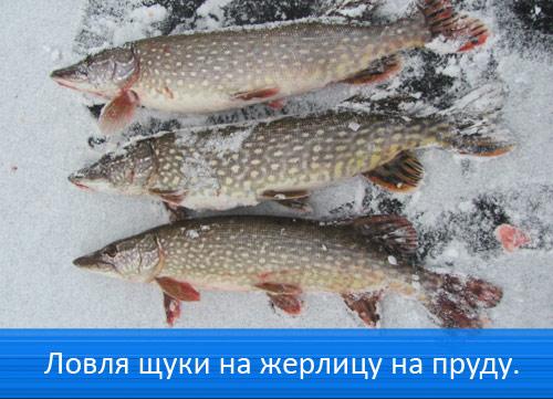 рыбалка на хищника в тульской
