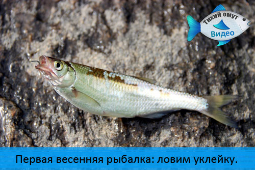 Первая весенняя рыбалка: ловим уклейку.