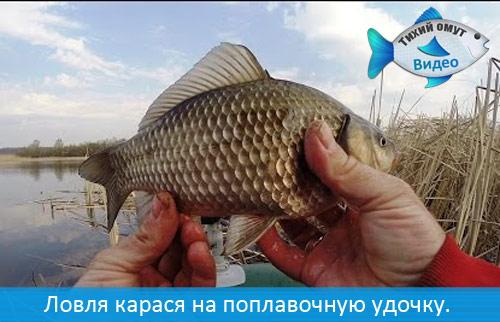 посмотреть поплавочную рыбалку