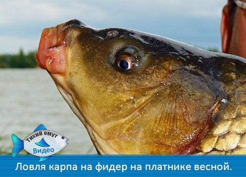 как в апреле ловить рыбу на фидер
