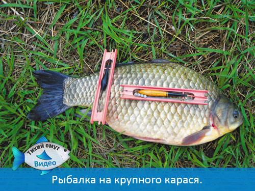 Рыбалка на крупного карася.