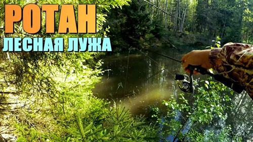 РОТАН на лесной