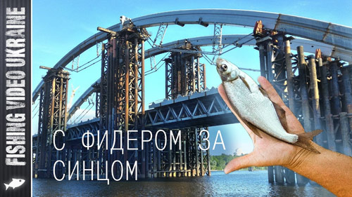 Ловля синца на фидер (Подольский мост)