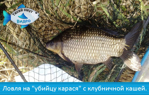 река кубрь рыбалка без границ
