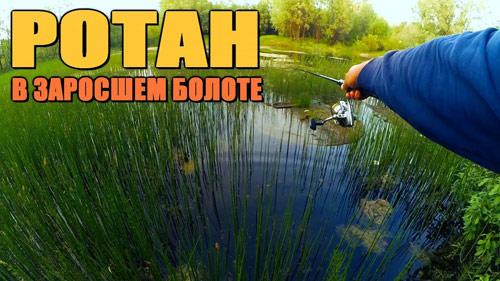 РОТАН в городском болоте!