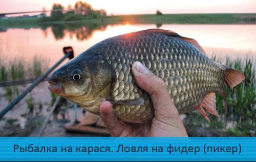 Рыбалка на карася. Ловля на фидер (пикер) весной.