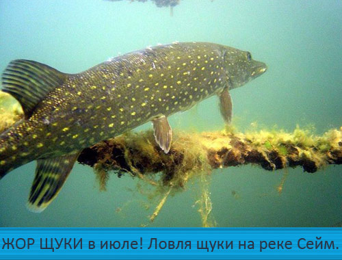 рыба весной на реке рыбалка