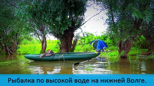 Рыбалка на нижней Волге по высокой воде. Сом на червя.