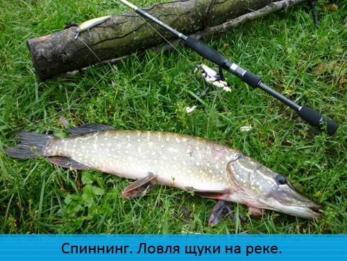 рыбалка на реке красивая меча
