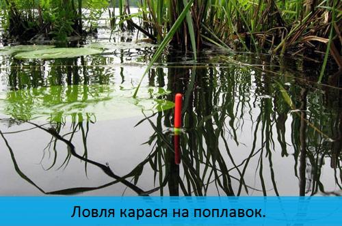 Ловля карася на поплавок.