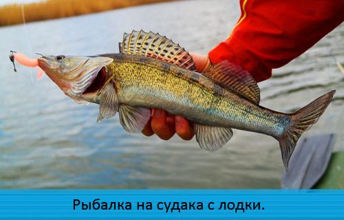Рыбалка на судака с лодки.