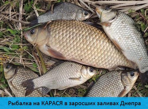 Рыбалка на КАРАСЯ в заросших заливах Днепра