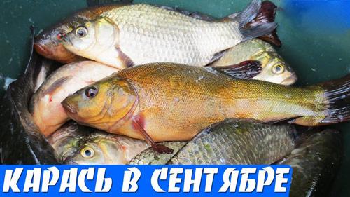 Рыбалка на малой реке, карась на поплавок.