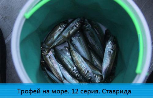 Трофей на море. 12 серия. Ставрида