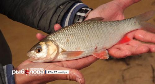 Календарь рыболова с 20 по 27 ноября 2017