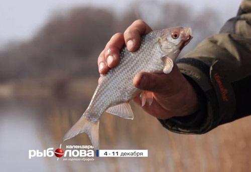 Календарь рыболова с 4 по 11 декабря 2017