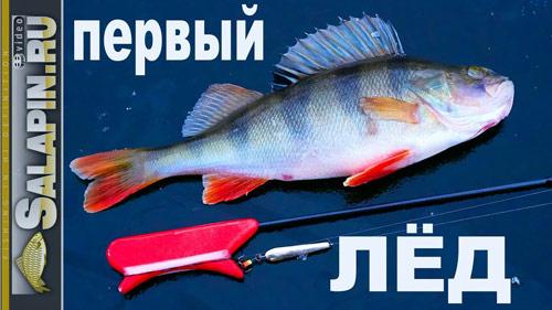 Зимняя рыбалка: первый лед 2017-2018, окунь на блесну.