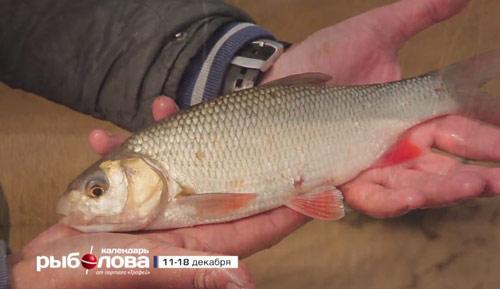 Календарь рыболова с 11 по 18 декабря 2017