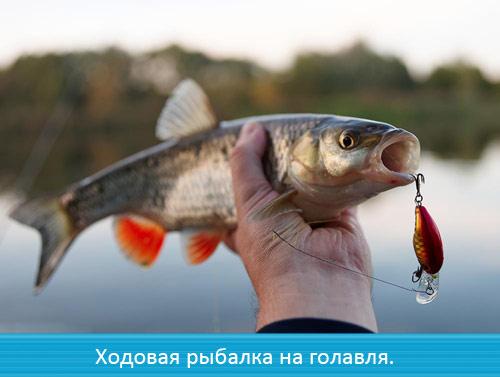 Ходовая рыбалка на голавля.