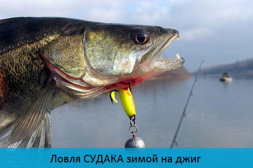 ловля судака осенью на водохранилищах