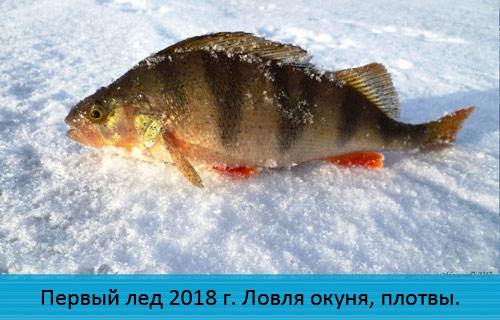 Первый лед 2018 г. Ловля окуня, плотвы на безнасадочную мормышку