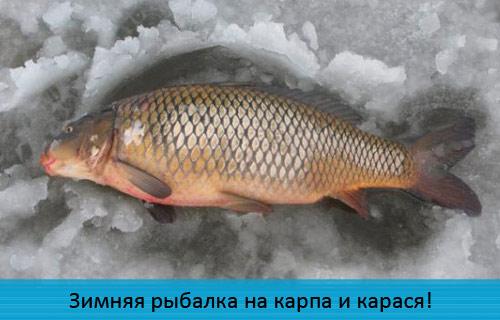 Зимняя рыбалка на карпа и карася!