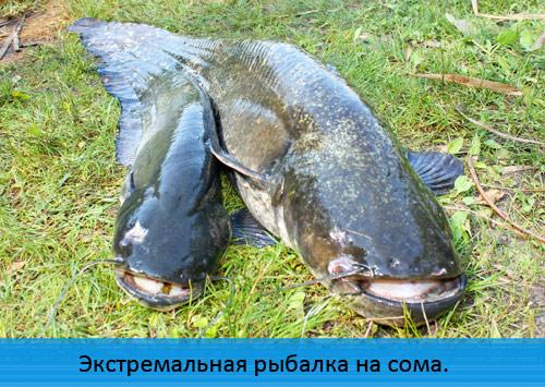 Экстремальная рыбалка на сома.