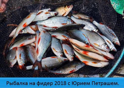 Рыбалка на фидер 2018 с Юрием Петрашем.