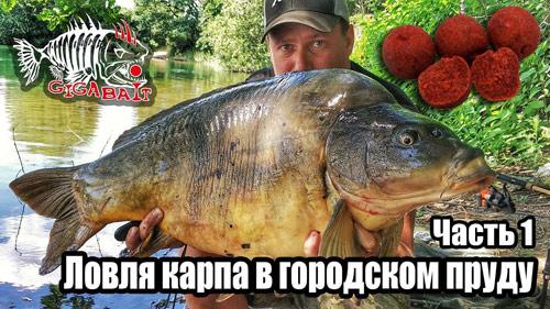 Рыбалка на карпа в городском пруду на бойлы #1