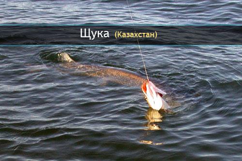 в казахстане ловля рыбы
