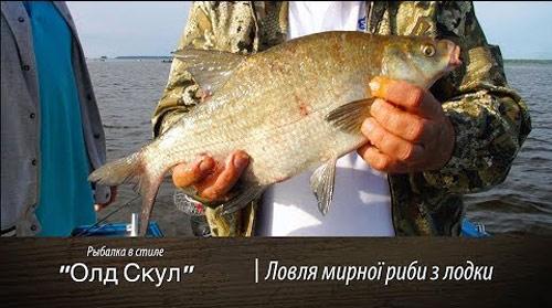 Ловля леща, густеры, подлящиков с лодки на Донку