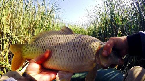КАРП на ПОПЛАВОК | Рыбалка в камыше