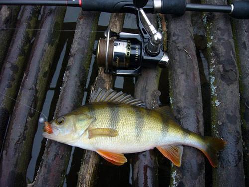 Рыбалка на щуку, окуня. Спиннинговая ловля на Десне