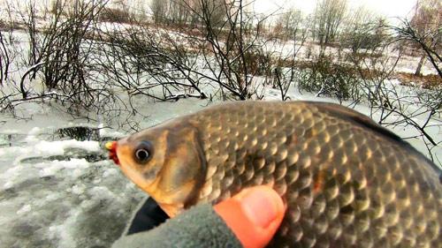 Зимняя рыбалка на карпа и карася в коряжнике!