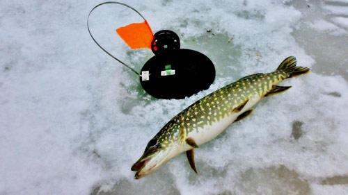 Зимняя рыбалка на щуку 2019.