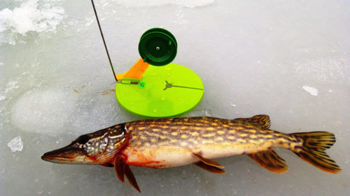 Рыбалка на щуку и окуня, жерлицы и безмотылка.