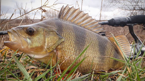Рыбалка на отводной поводок от А до Я.