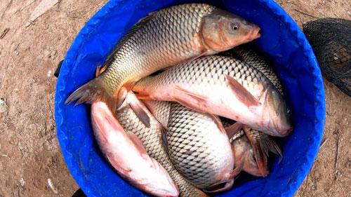 Рыбалка на карпа с фидером и ловля карпа на флэт снасть с кукурузой.