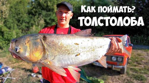 Рыбалка на толстолоба с ночевкой.
