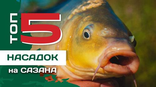 ТОП 5 насадок для ловли сазана от Евгения Конюшевского