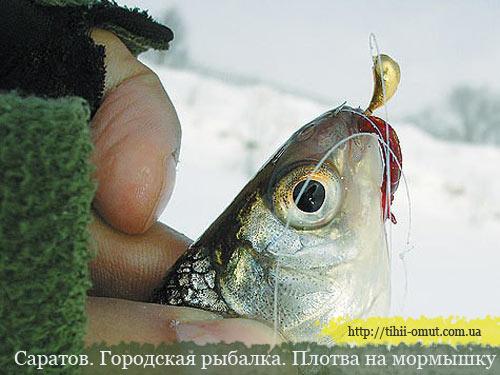 Саратов. Городская рыбалка. Плотва на мормышку