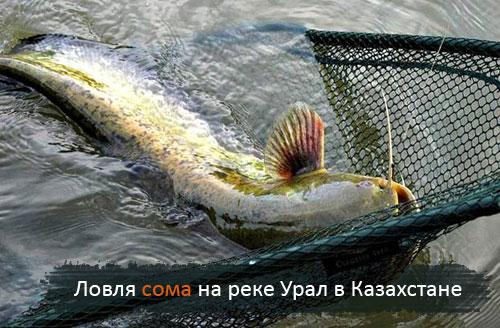 Ловля сома на реке Урал в Казахстане