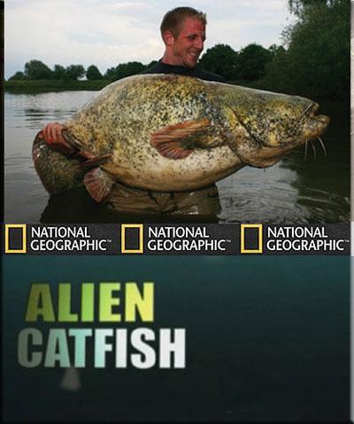 Рыбы-чудовища. Сом чужак