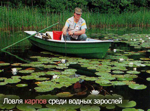 Ловля карпов среди водных зарослей