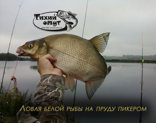 Ловля белой рыбы на пруду пикером